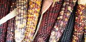 Färsk majs — Stockfoto