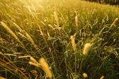 Field of grass — Stock Photo