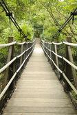 Footbridge in tropical jungle — Stockfoto