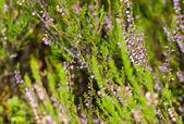 Summer nectar — Stock Photo