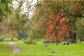 In autumn park — Stock Photo