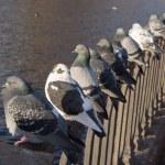 Bird diagonal — Stock Photo