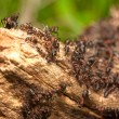 Stock Photo: Anthill on tree trunk