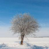 孤独な冬の木 — ストック写真