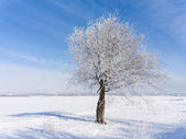 Winter tree — Stock fotografie