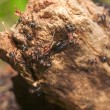 Anthill close up - Zdjęcie stockowe