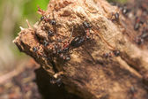 Anthill close up — 图库照片