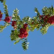 Rowan tree against the sky — Stock Photo
