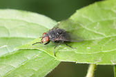 Fly on a green leaf — Stock Photo
