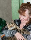 Turuncu gözlü kedi — Stok fotoğraf