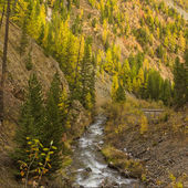 Small mountain river — Stock Photo