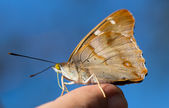 Butterfly on human finger — Stock Photo