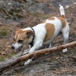 Puppy gnaws a tree branch — Stock Photo