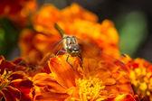 赤い花にトンボ — ストック写真