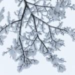 Winter branch — Stock Photo #31410043