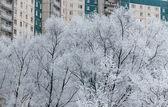 Soğuk kış günü — Stok fotoğraf