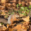 Squirrel under the tree — Stock Photo #33934319