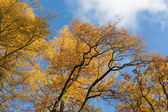 Yellow autumn — Stock Photo