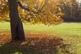 Autumn chestnut — Stock Photo