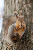 Squirrel on a tree branch — Стоковое фото