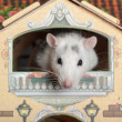 Stock Photo: Rat on balcony