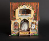 Rat in the dollhouse — Stock Photo