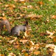 Squirrel on the grass — Stock Photo