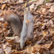 Squirrel on hind legs — Stock Photo
