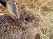 Coniglio closeup — Foto Stock