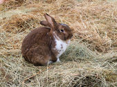 Portrait of a rabbit on the hay — Stock Photo