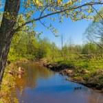 Spring landscape — Stock Photo #39357689