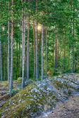 Landschap in het forest — Stockfoto