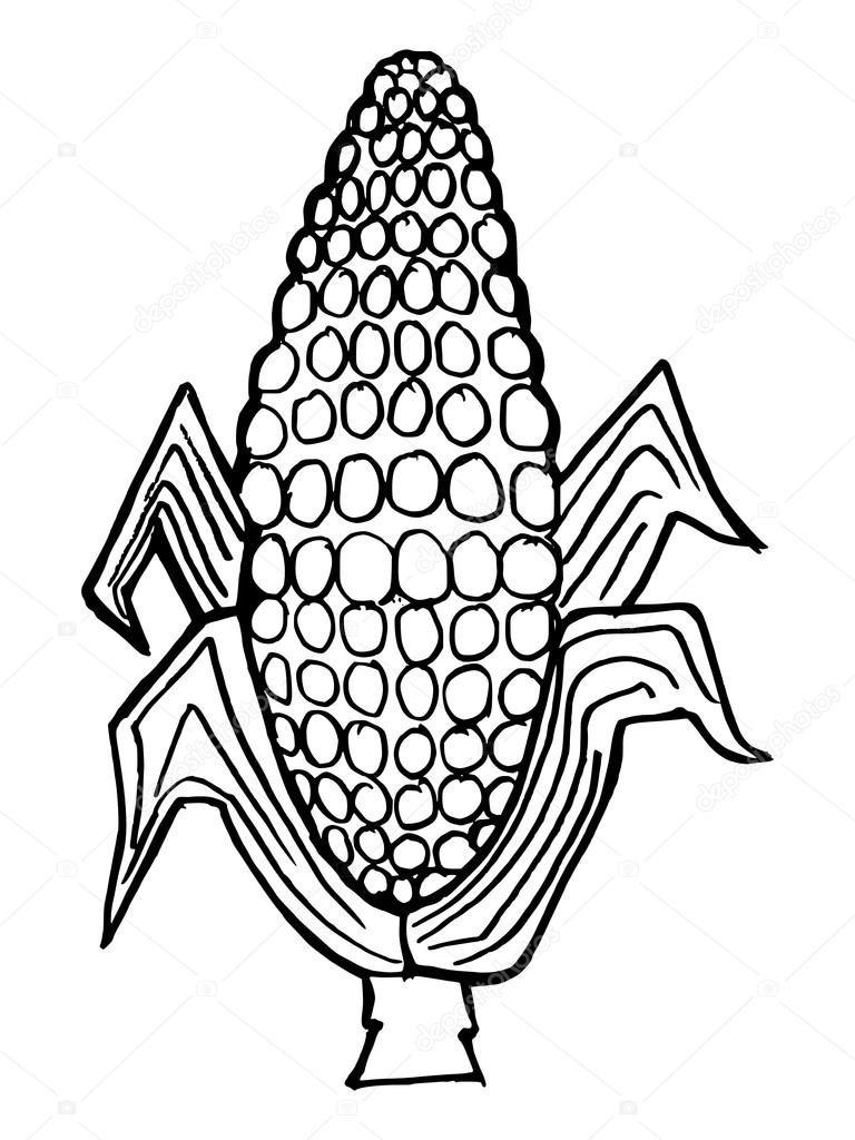 Harvest corn coloring pages coloring pages for Coloring pages of corn