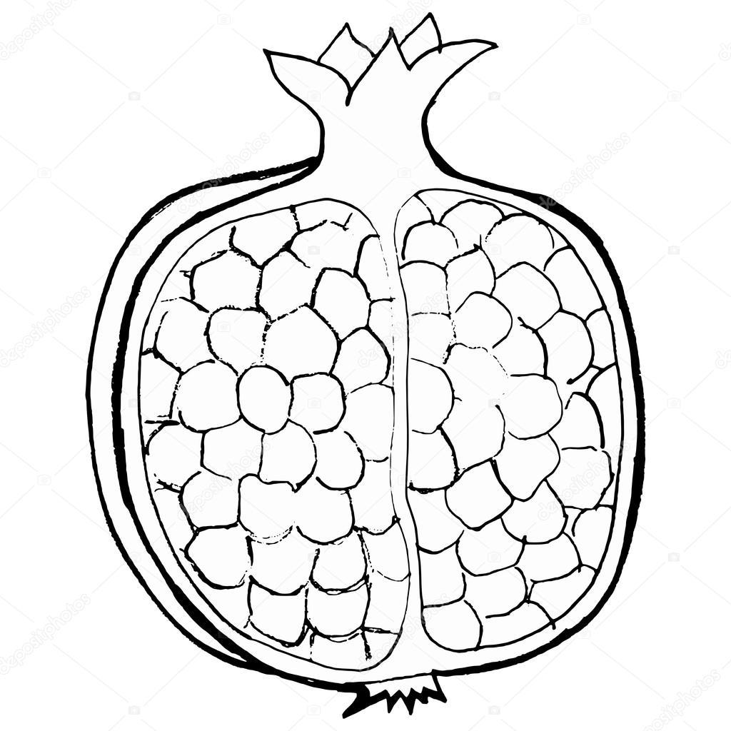 Pomegranate — Stock Vector © Perysty #21487707