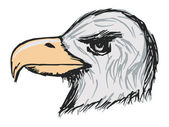 American bald eagle — Vector de stock