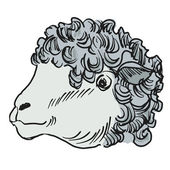 Head of sheep — Stock Vector
