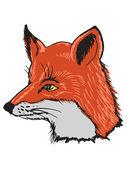 Head of fox — Stock Vector