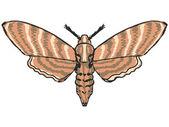 蛾类 — 图库矢量图片