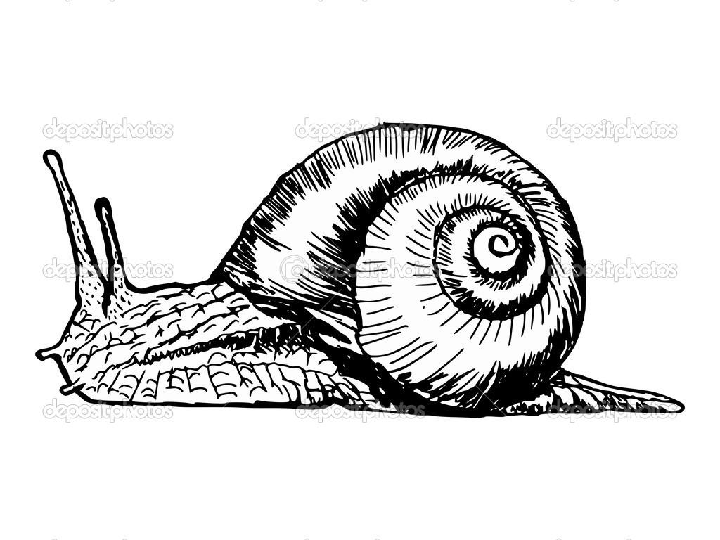手绘, 素描, 漫画插图的蜗牛– 图库插图