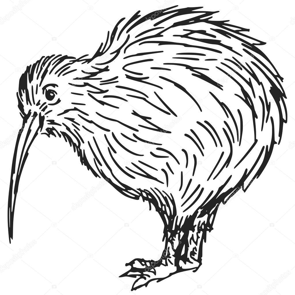 Line Drawing Kiwi : Kiwi bird — stock vector perysty