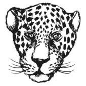 Jaguar — Stock Vector