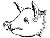 Head of pig — Stock Vector