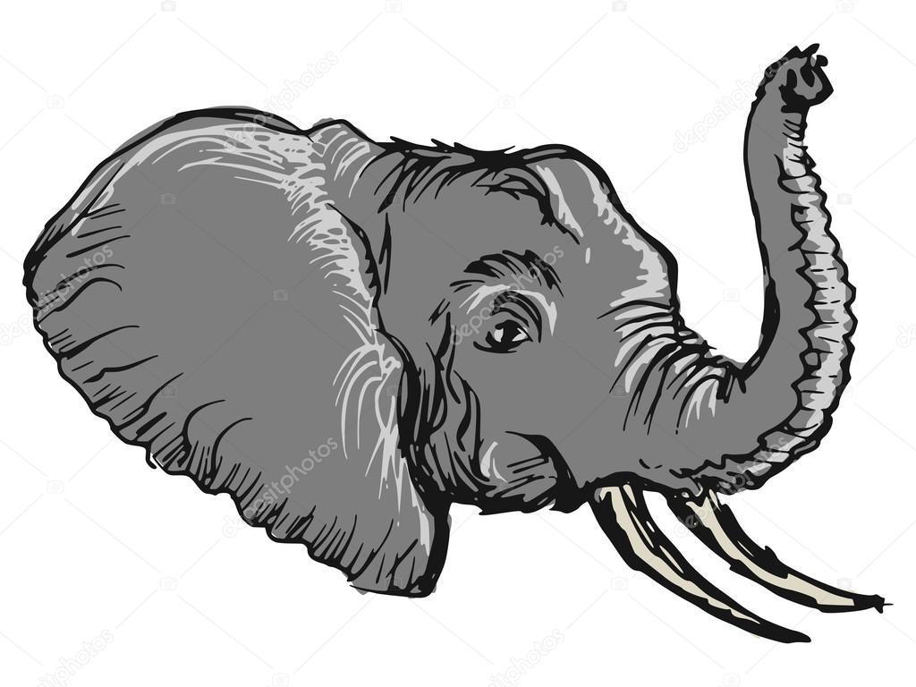 手绘, 素描, 漫画插图的大象头– 图库插图
