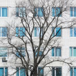 Stock Photo: Tree without leaves against wall with windows