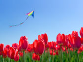 Kite soars into the sky over the flowers — Stock Photo