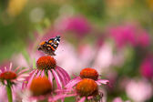 Butterfly on flower in garden — Stock Photo