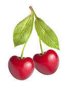 Cherry on white background — Stock Photo