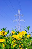 Yellow flowers in a field on the background high voltage line — Stock Photo