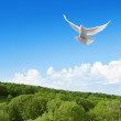 White dove in the sky above forest — Stock Photo #27650307