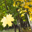 Autumn leaf falls from the tree — Stock Photo